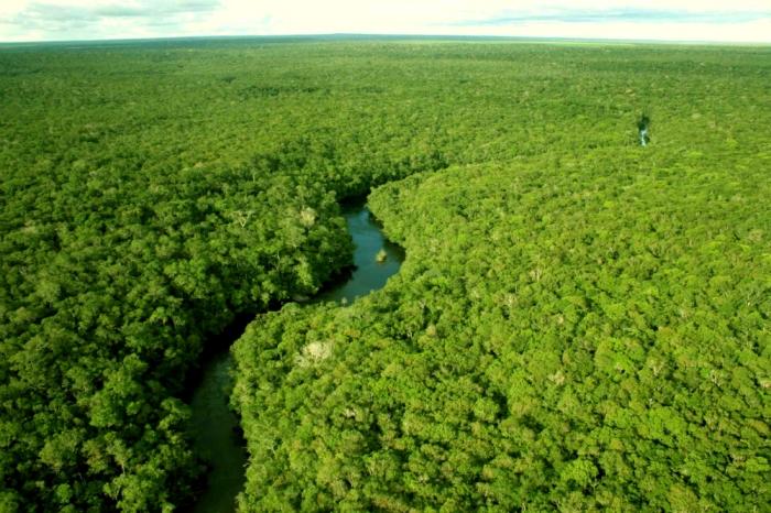 Diminuiu o desmatamento na amazonia